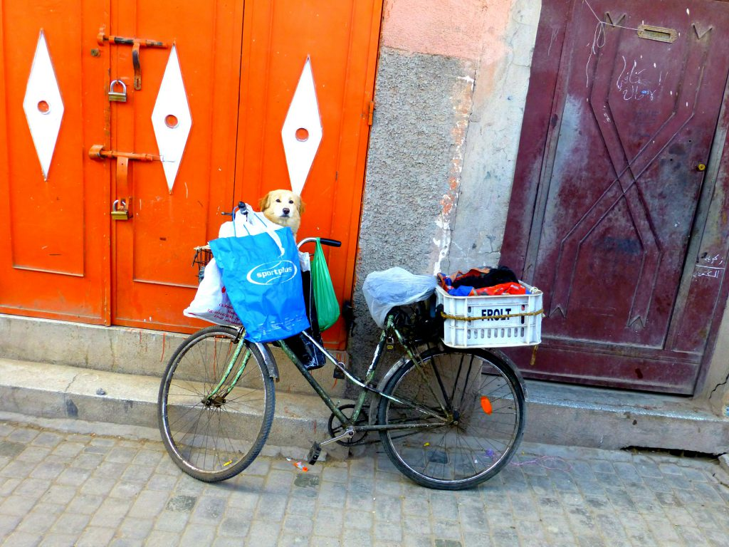 Biking in Marrakesh
