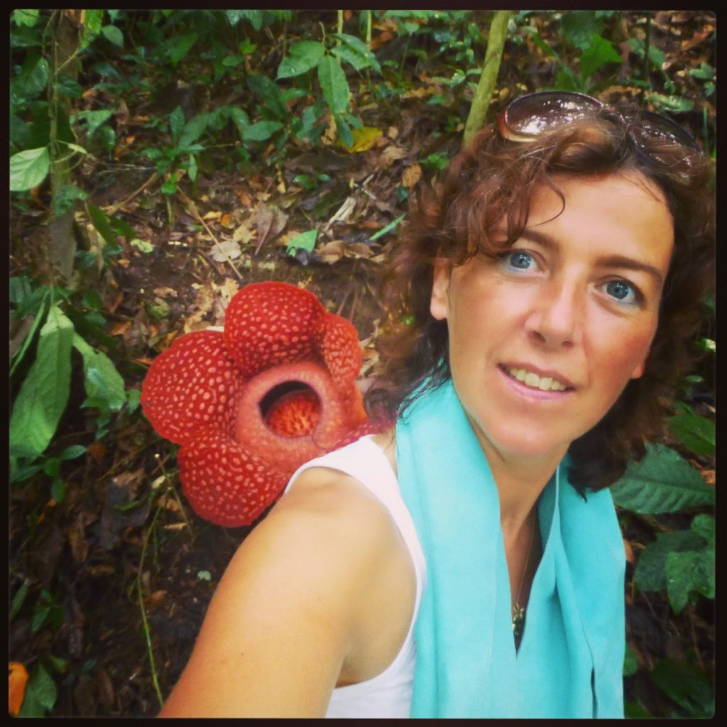 Rafflesia: Biggest Flower in the World - Indonesia