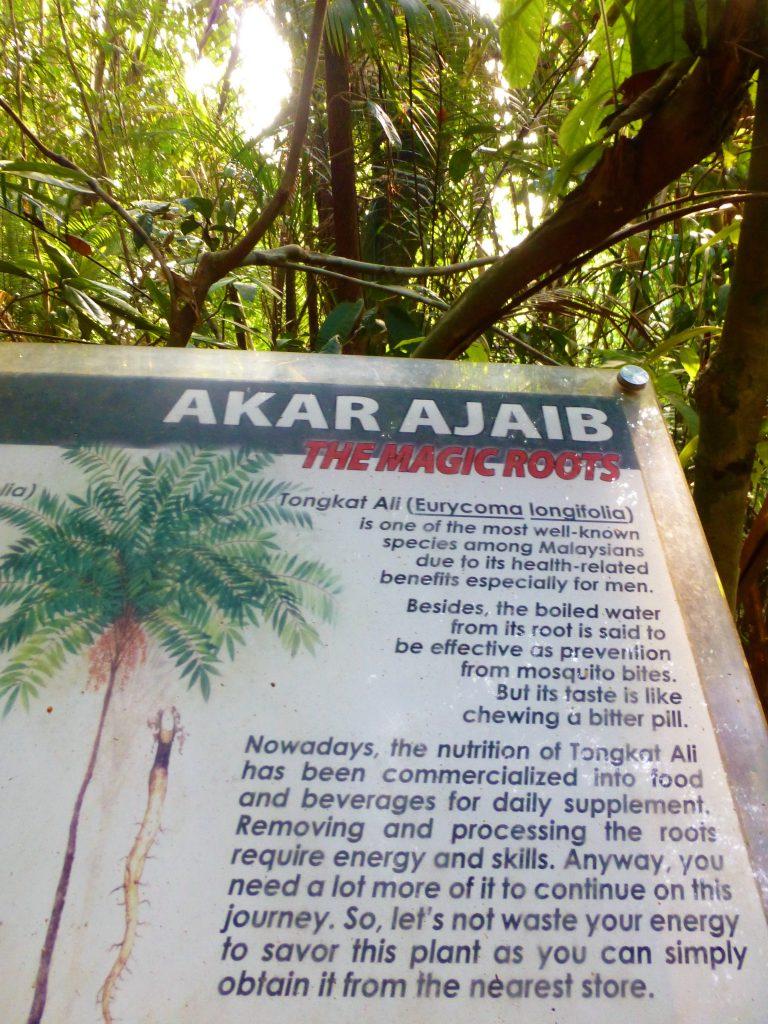 Hiken in het Nationaal Park Pulau Penang, Maleisie