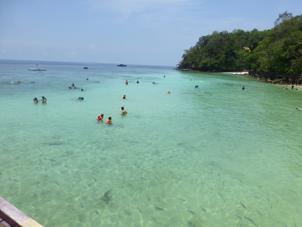 Snorkeling with the Blacktip Reef Shark - Pulau Payar