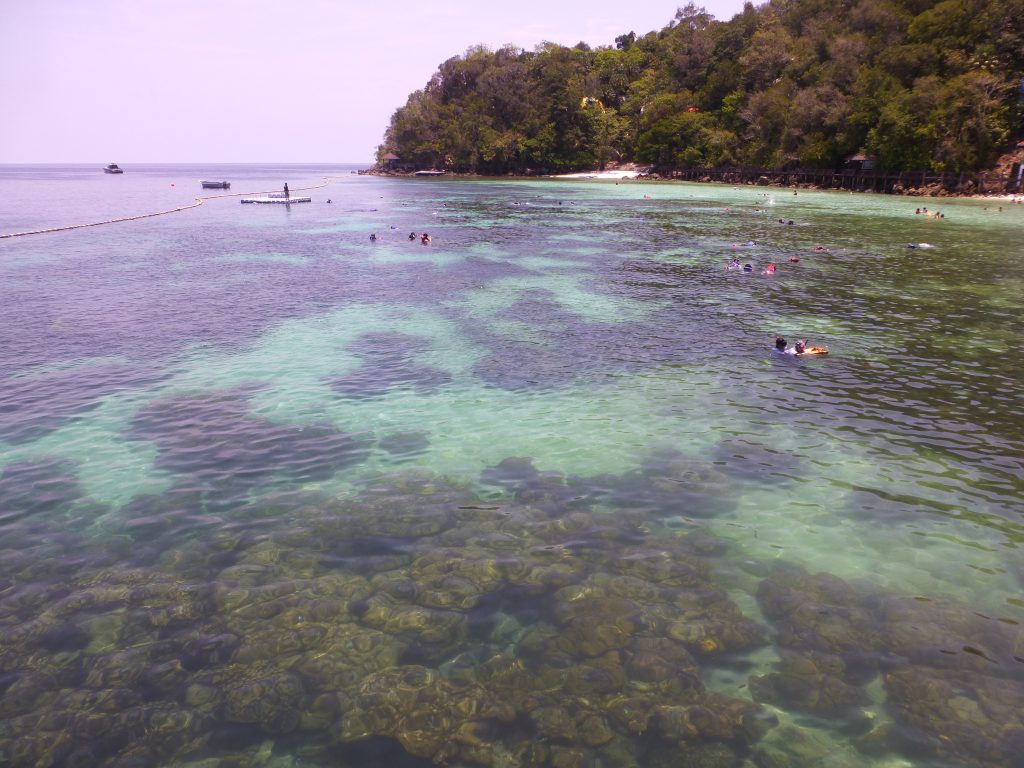 Snorkeling with the Blacktip Reef Shark at Pulau Payar