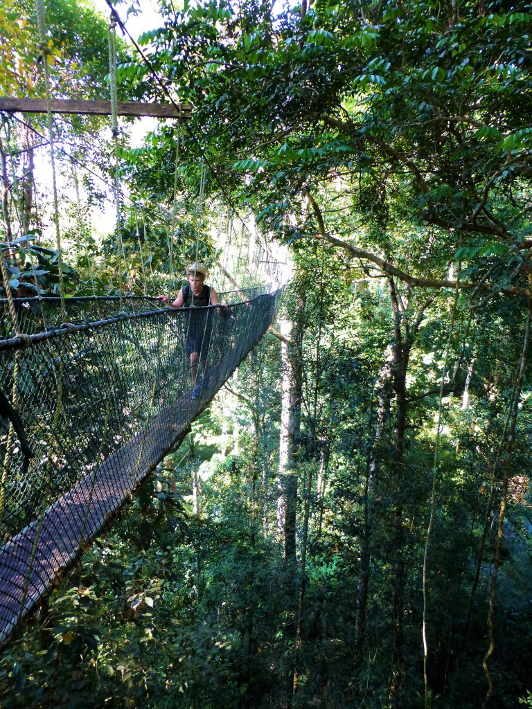 Walking the Canopy