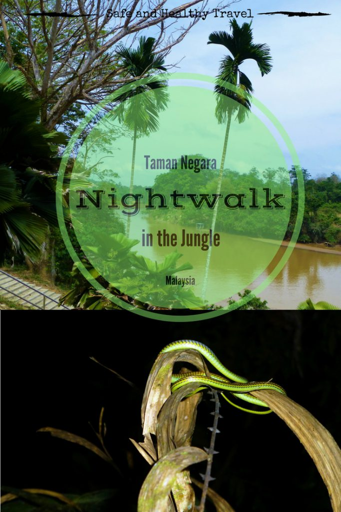 Nightwalk into the Taman Negara