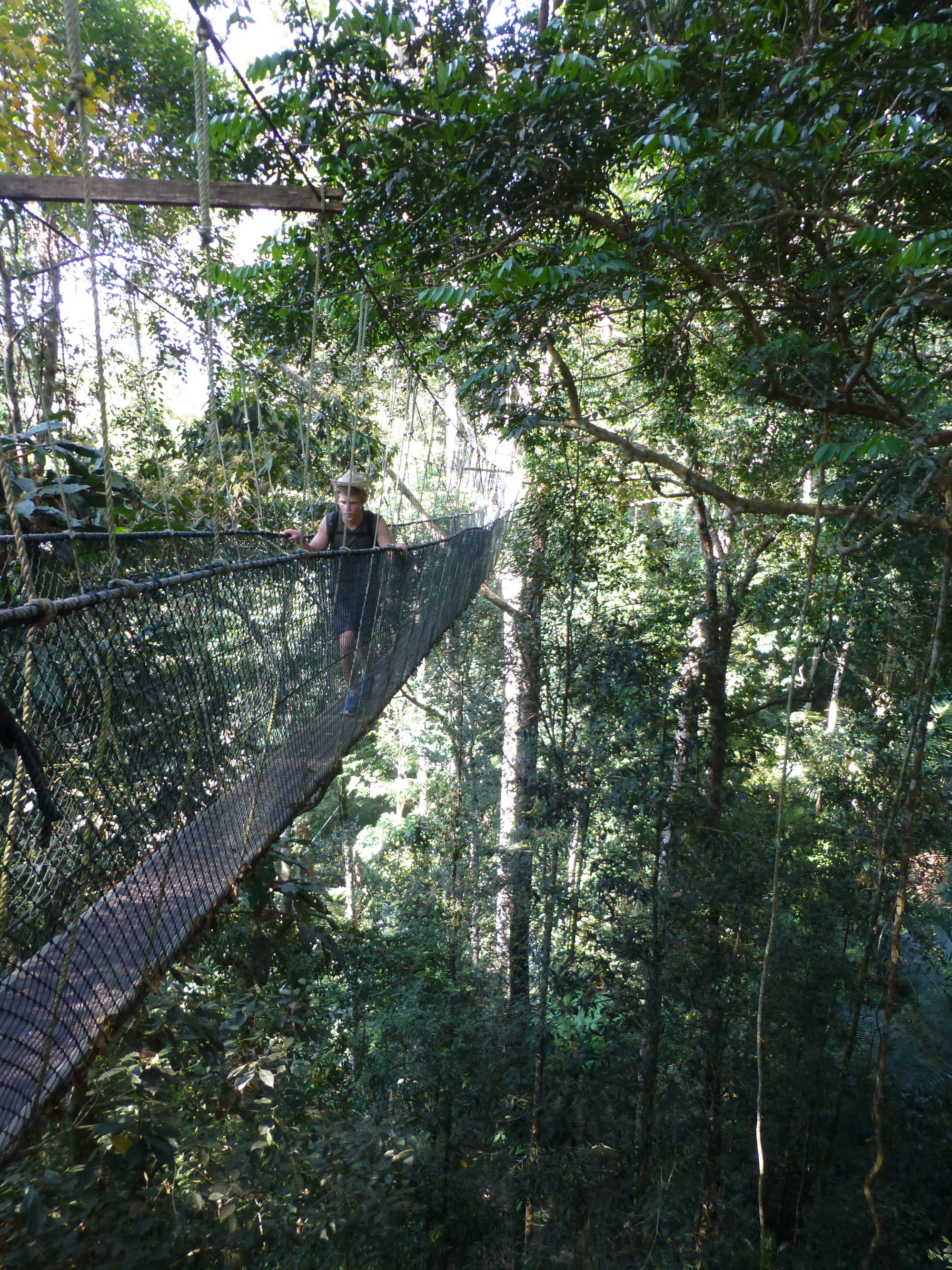 Canopywalk in de Jungle van de Taman Negara