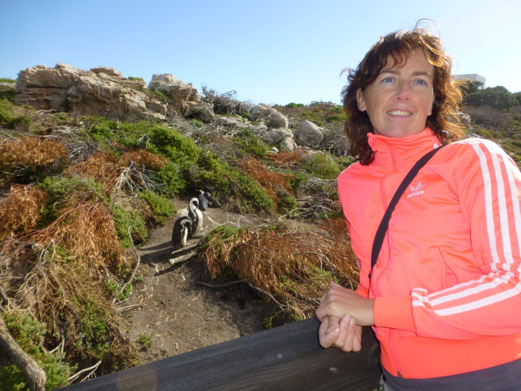 Penquins of Betty's Bay, South Africa