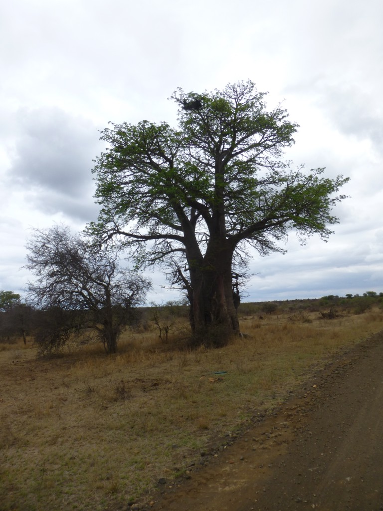 Third day of my Adventure - Safari