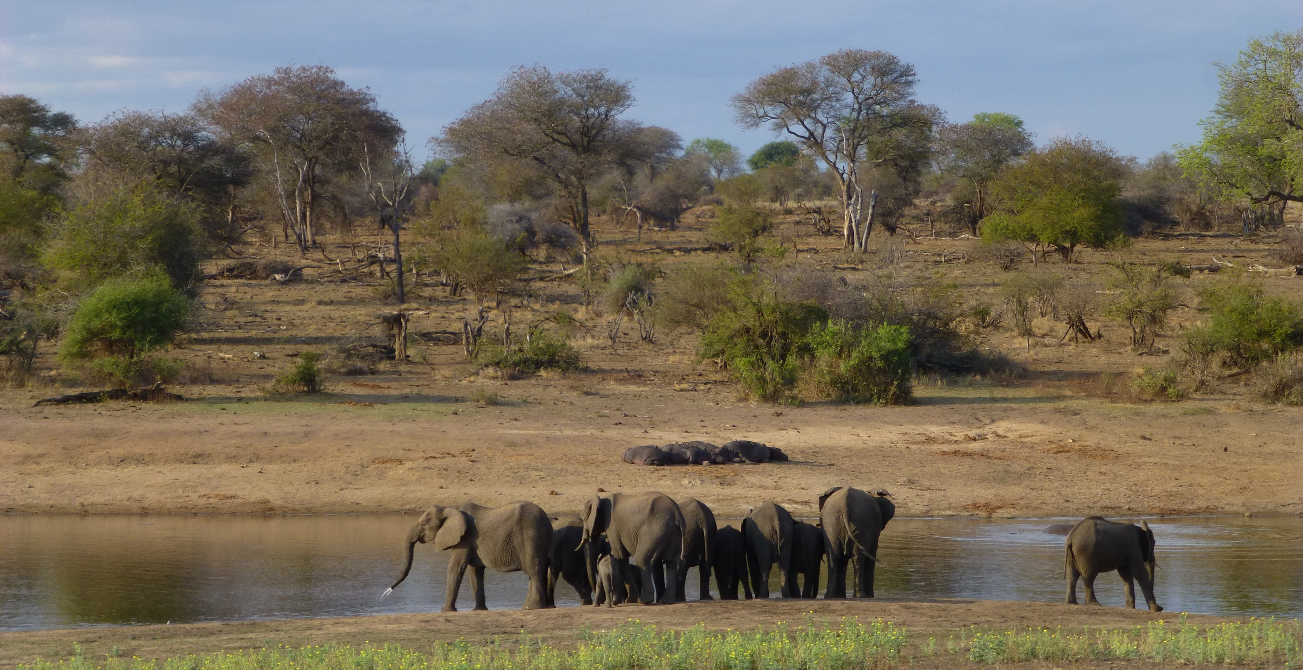 Third day of my Adventure - Safari