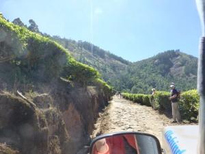 Kannan Devan, Theeplantages bij Munnar