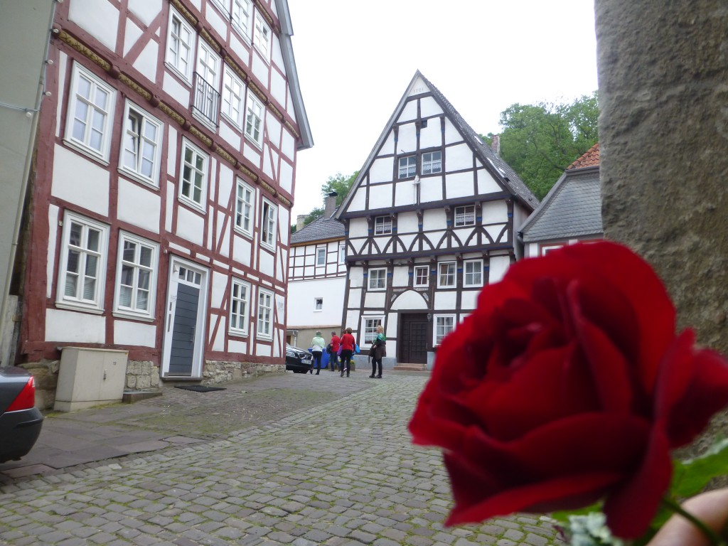 Rose in Warburg