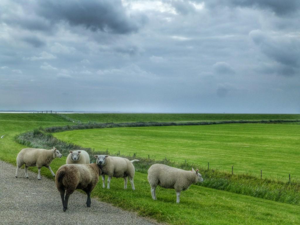 Wadlopen van Holwerd naar Ameland, Nederland