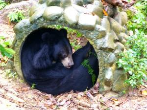 Bear in Shelter, Kuang Si Waterfall