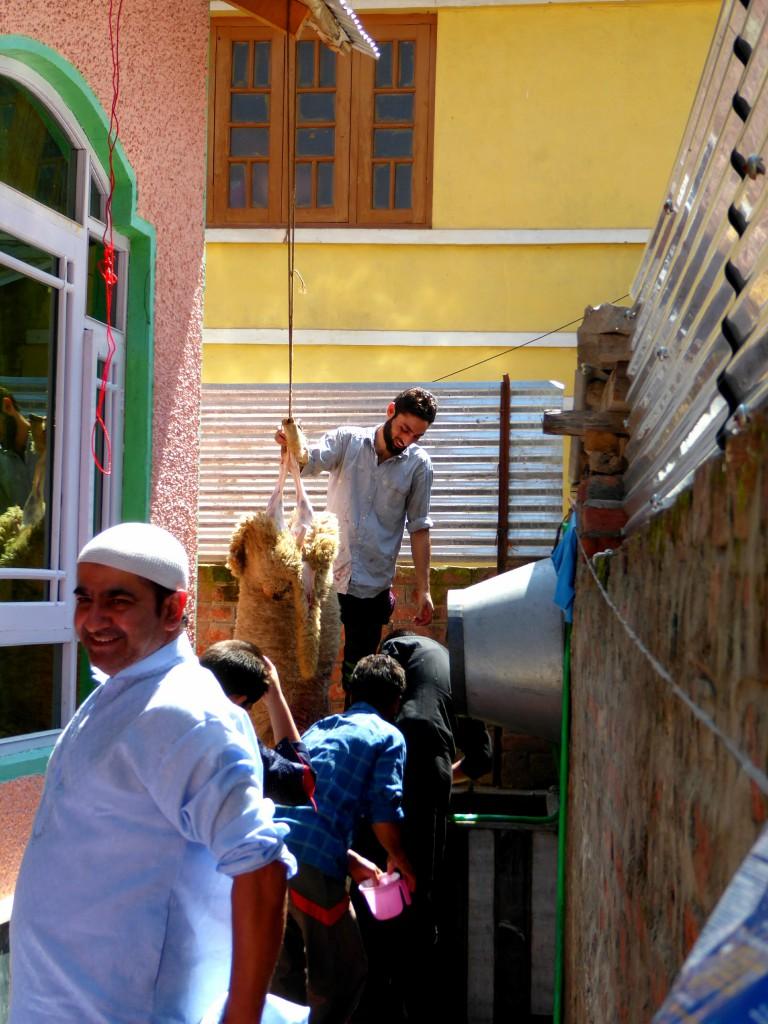 Trotse Latif, Moslim Feest Eid Ul Adha