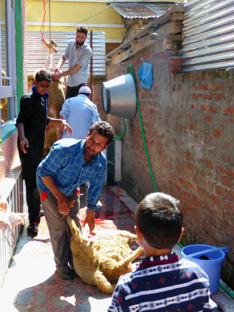 Sacrificing Sheep, Muslim Feest Eid Ul Adha