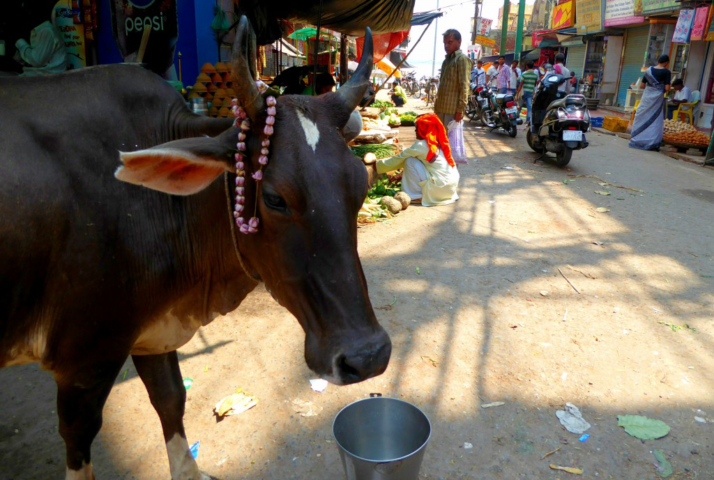 Dashashwamedh Ghat - Lokale Kookles