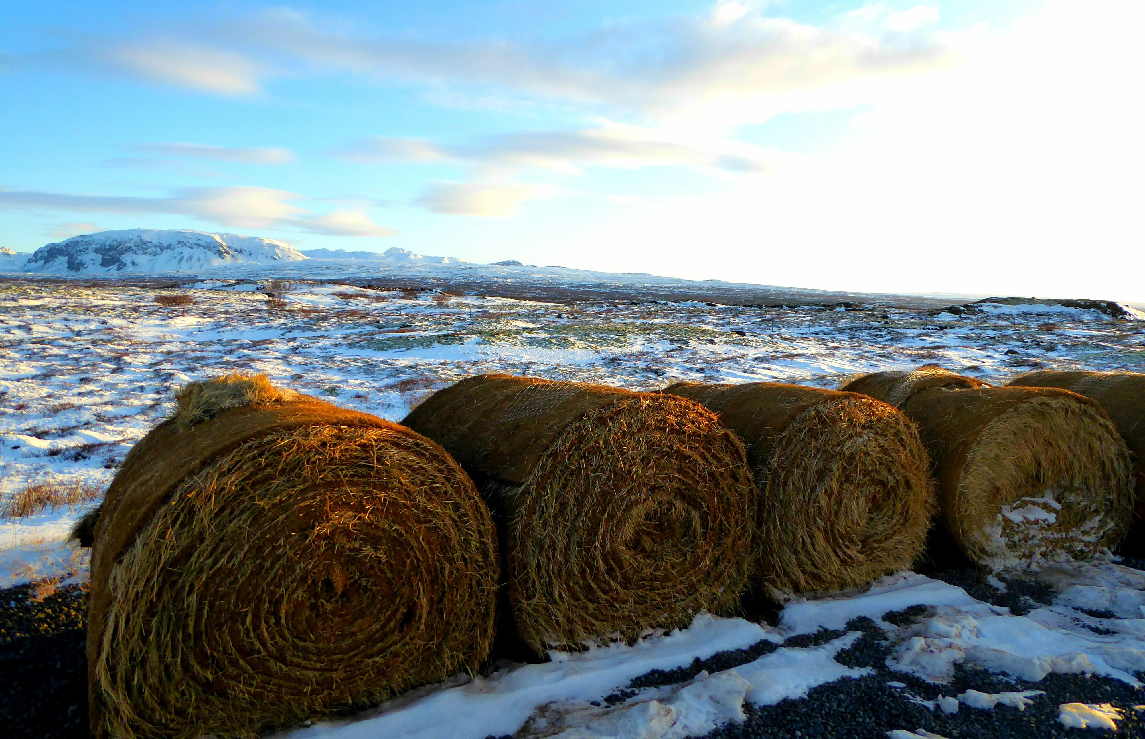 Thingvellir - IJsland P2
