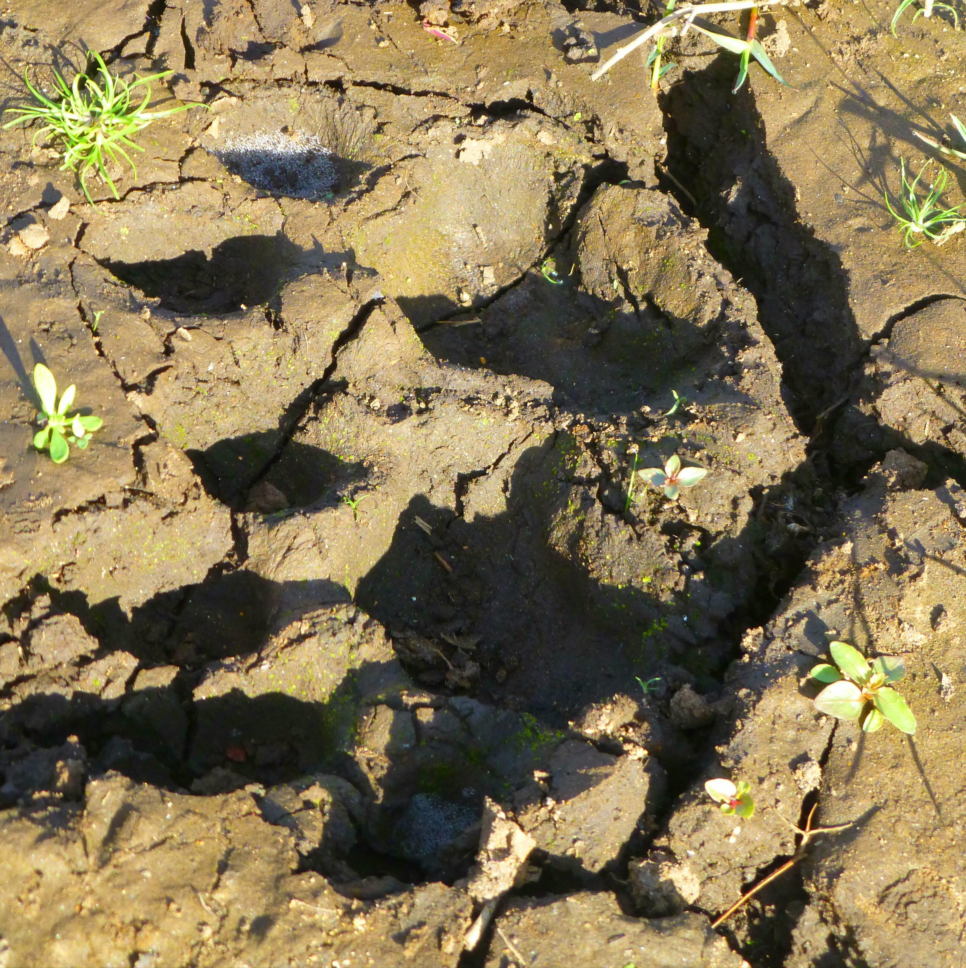 Tijger spotten - Periyar Tiger Resereve