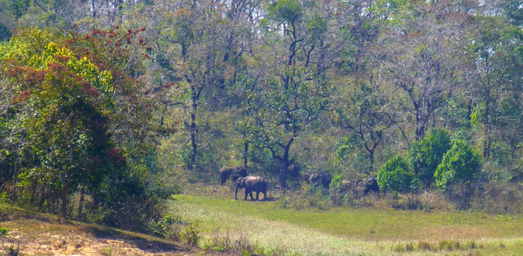 Tijger spotten - Periyar Tiger Reserve