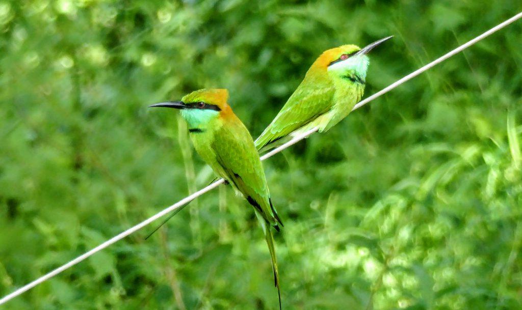 10 dagen op het schone en groene Sri Lanka