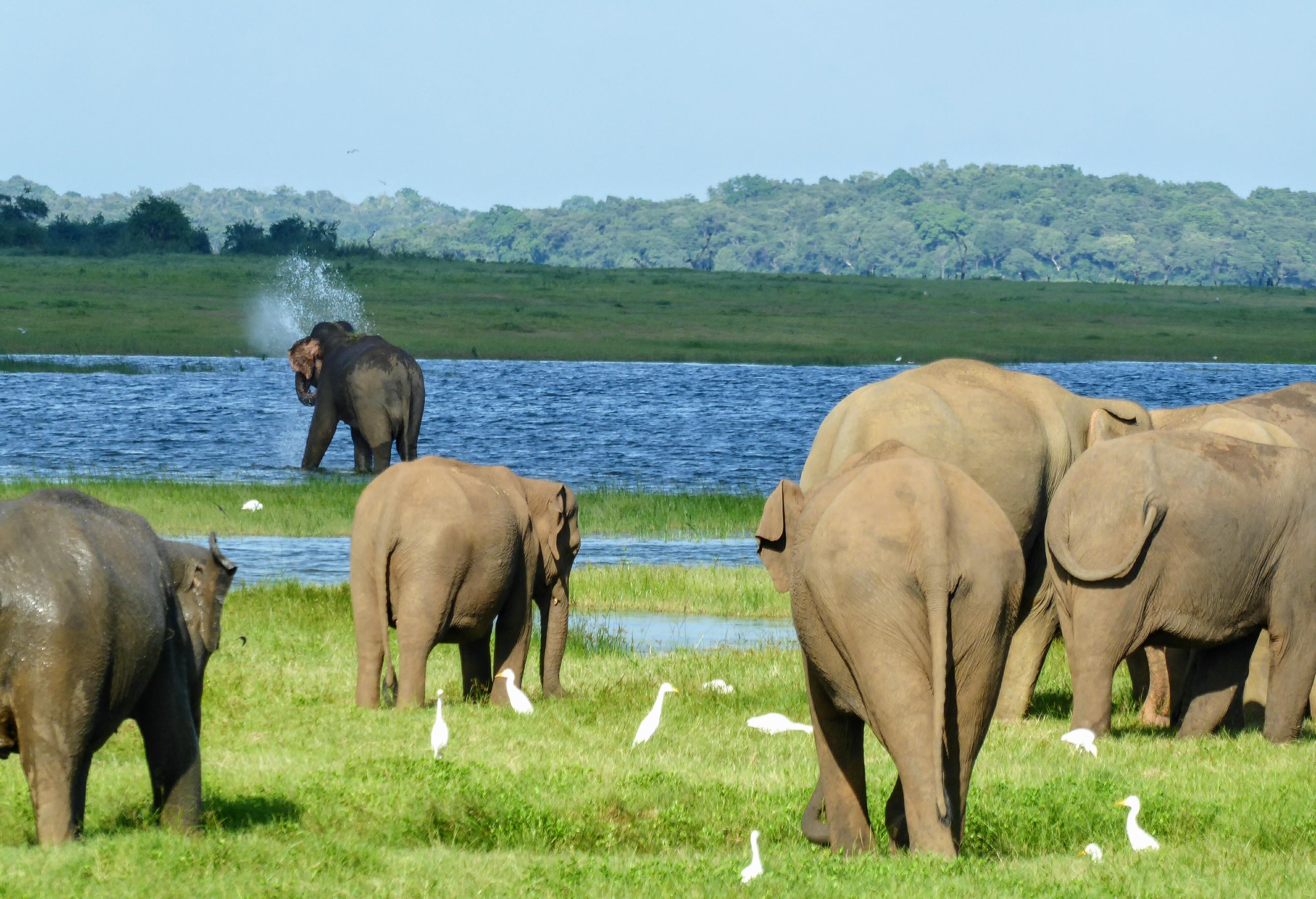 Kaudulla NP, Sri Lanka