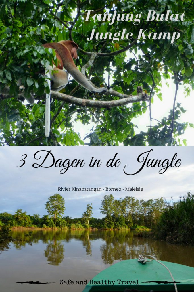 dagen in jungle van Kota Kinabatangan