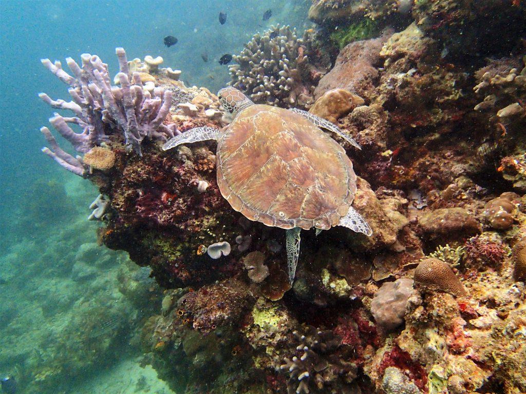 Diving at Sipadan - Borneo, Malaysia