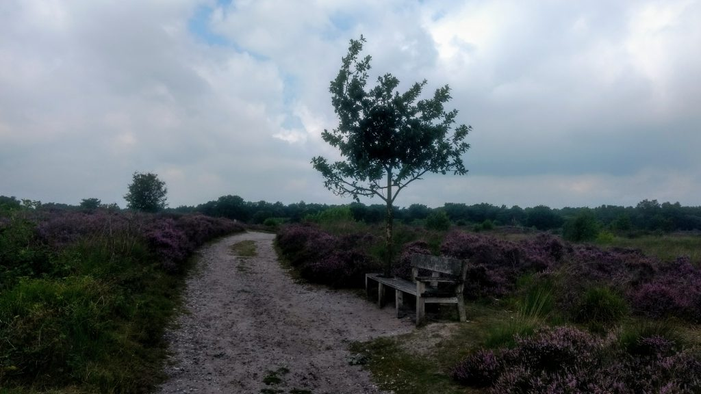 3 Short Hikes @ Engbertsdijksvenen - The Netherlands