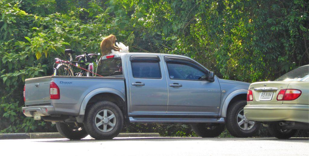 3 dagen in het Khao Yai NP - Thailand