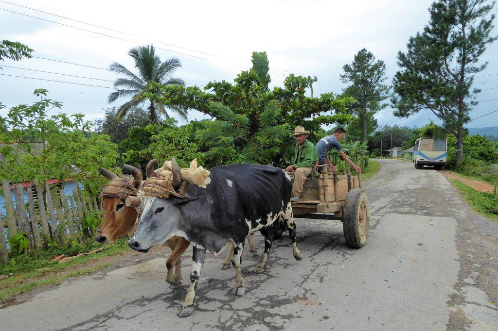 Naar de sigarenboer bij Valle De Viñales - Cuba