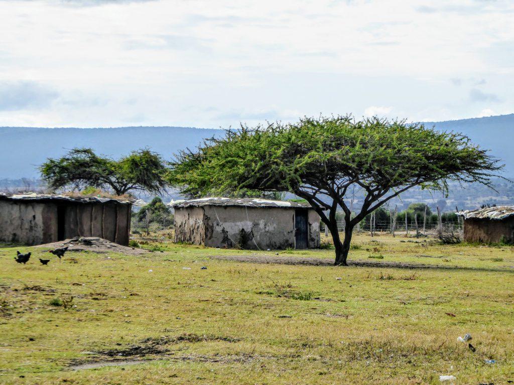 Masai Mara - Kenia