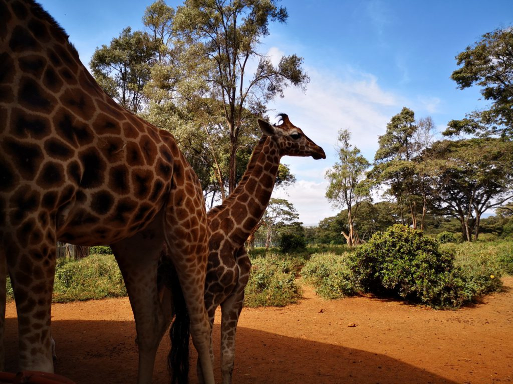 What to do in Nairobi - Kenya