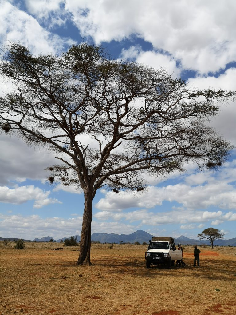Werken in Tsavo East Nationaal Park in Kenia - Wildlife