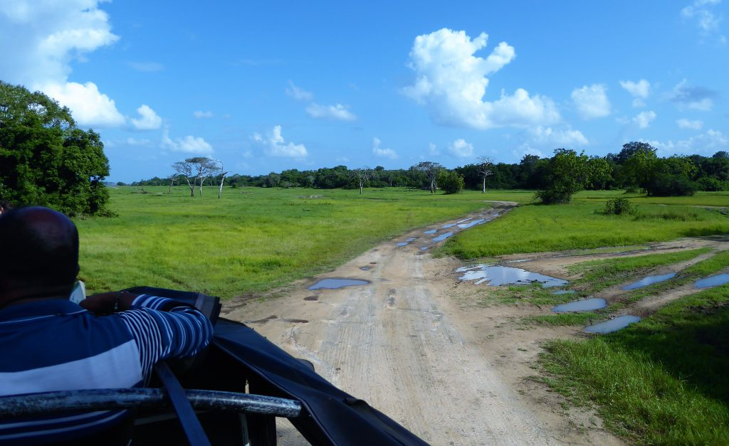 Op safari in Kaudulla National Park - Sri Lanka