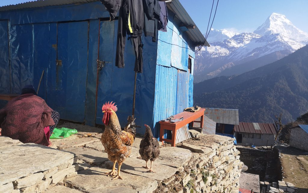 Poon Hill Trek - Nepal (8 days/7nights)