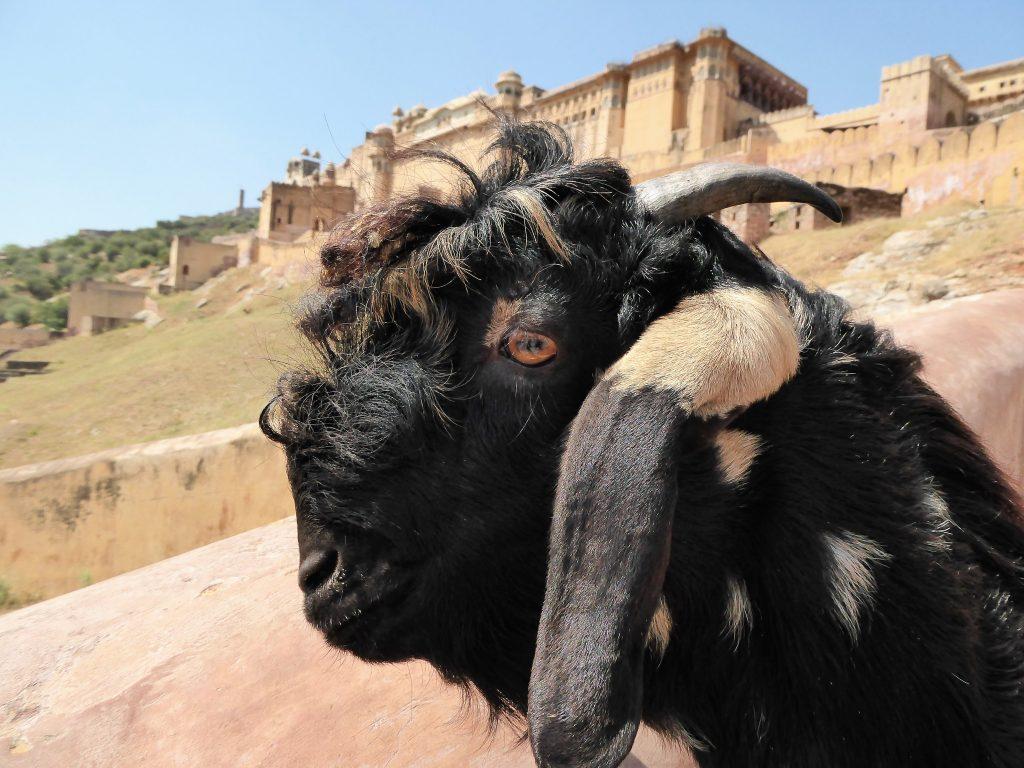 Jaipur - Rajasthan, India